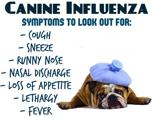 Influenza is Common in Dogs