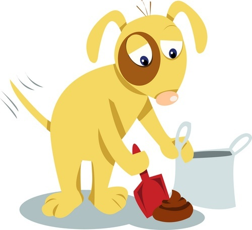 Clean Your Dogs Poop ASAP