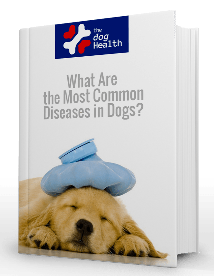 Most Common Diseases In Dogs