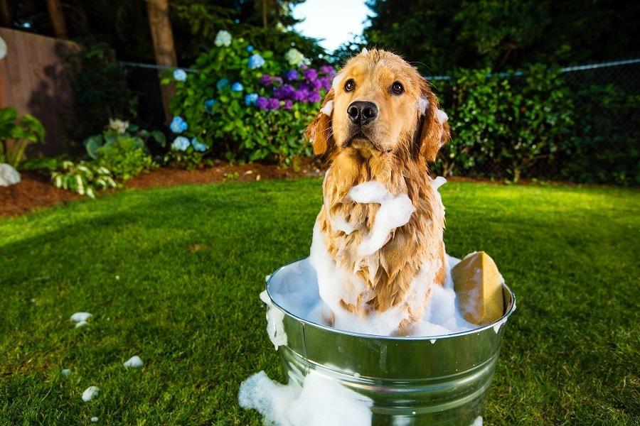 Dog Sitting in Shampoo Bucket