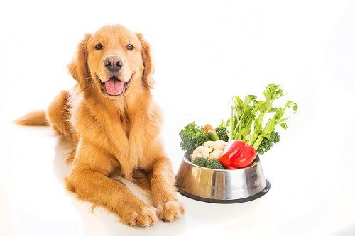Golden Retriever Dog Laying Next to a Bowl of Vegetables