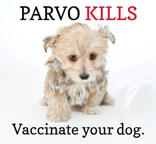 Vaccinate Your Dog