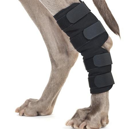 Knee Bandage Support on Dog's Knee