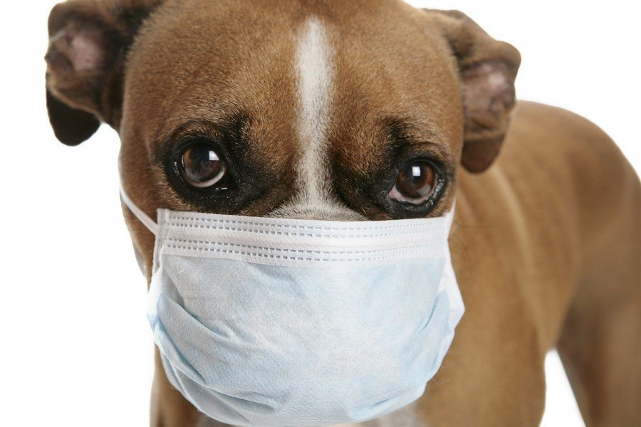 Dog Wearing Dental Mask