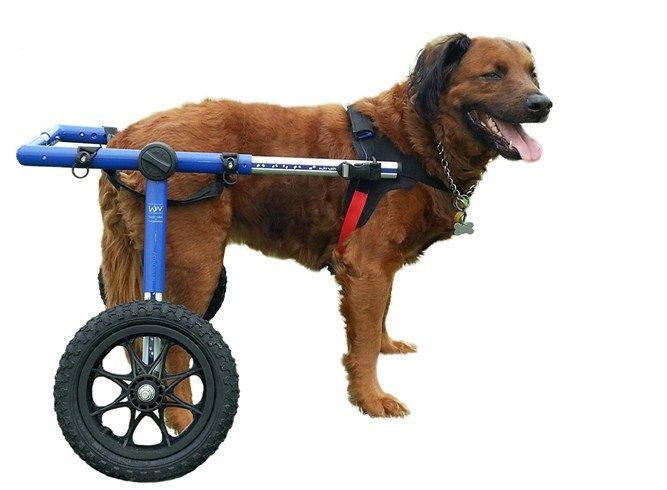 Walkin Wheels Wheelchair