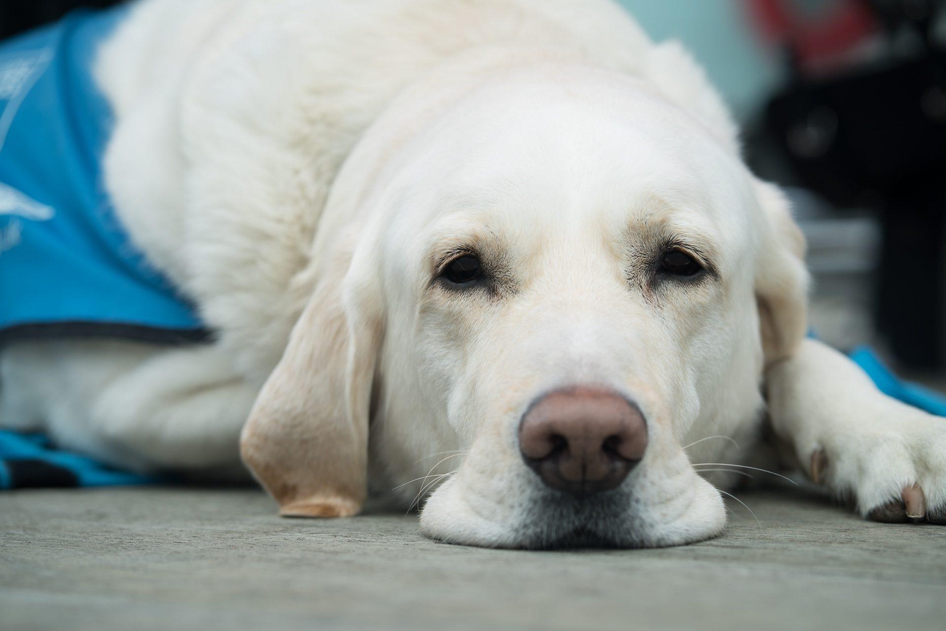 dog-3175814