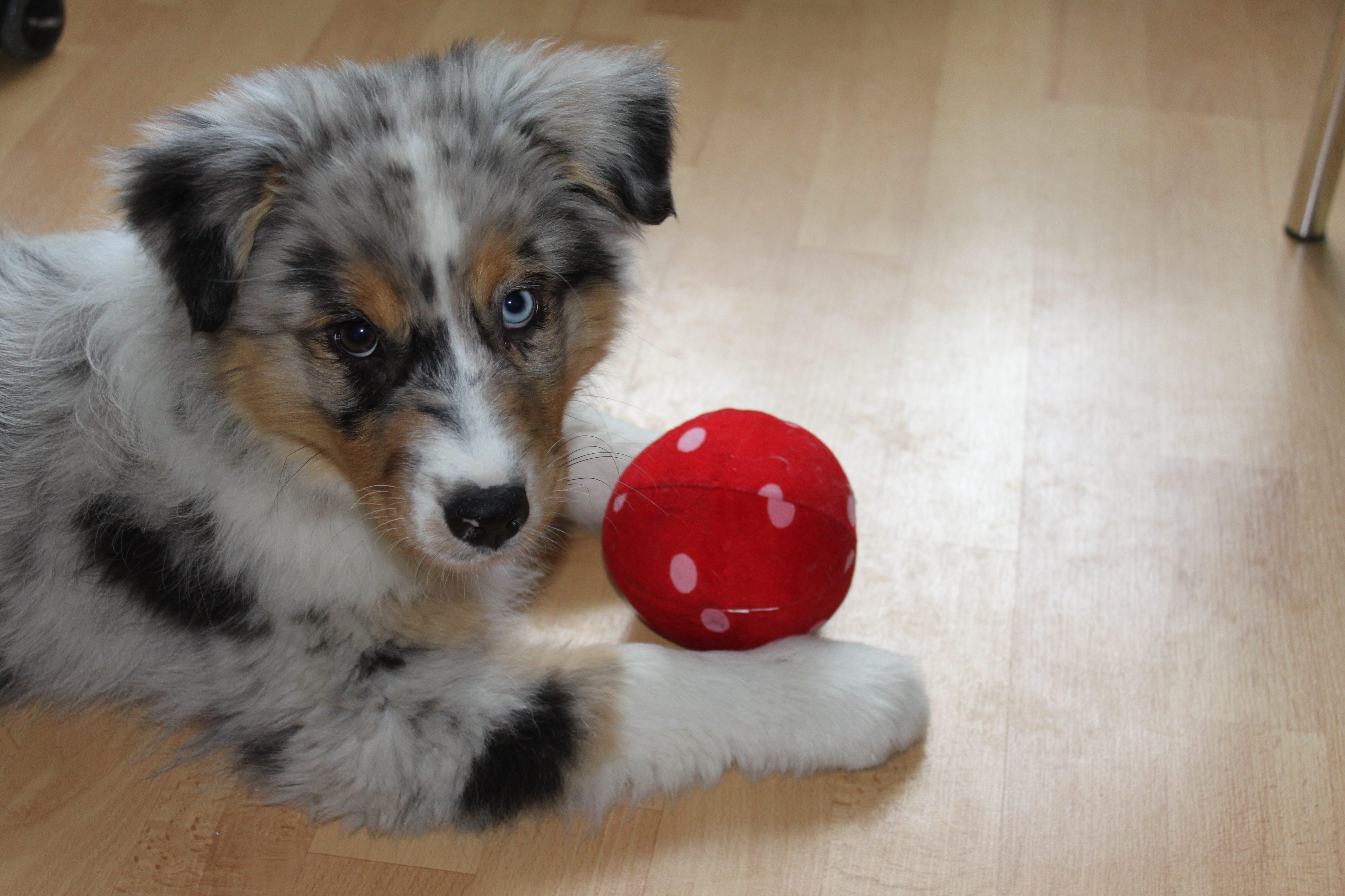 puppy-427137